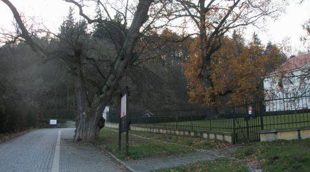 rozeklaný strom u boskovického zámku