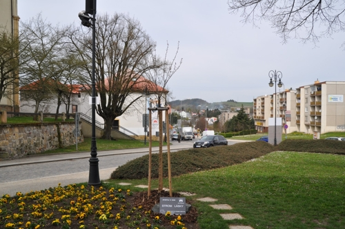 Strom lásky na Masarykově náměstí